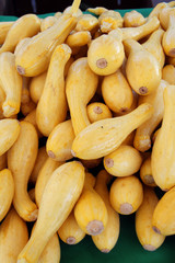 fresh organic yellow squash
