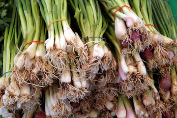 fresh organic green onions scallions