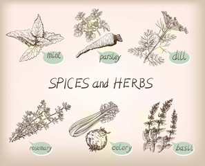 herb spice