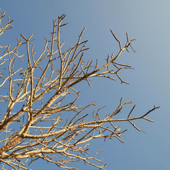Tree branches without leaves against the blue sky