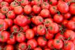 Fresh organic tomatoes - 70302223