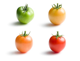 variously ripe tomatoes
