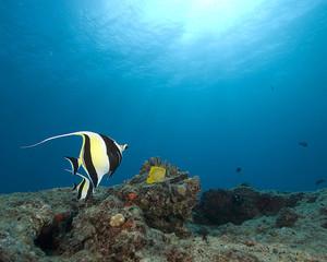 Underwater Hawaii Coral Reef