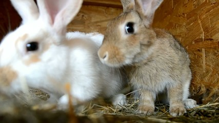 Rabbits in the shed