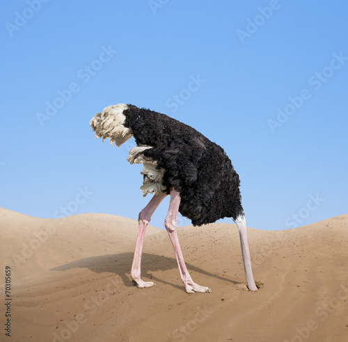 In de dag Vogel scared ostrich burying its head in sand concept