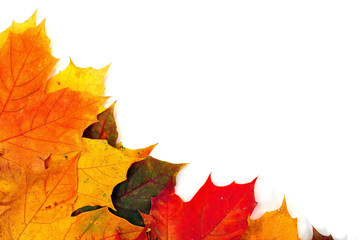background of colorful autumn maple leaves