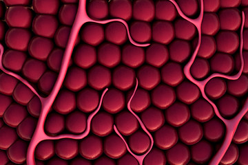cells, Capillary
