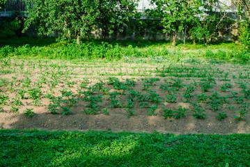 Paesaggio di campagna, campo coltivato orto, agricoltura