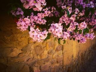 Flores en el muro - Flowers on the wall