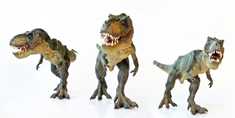 A Tyrannosaurus Trio on a White Background