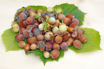 Heap of hazelnuts on leaves close up on a light wood