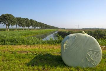 Bale of hay lying in a meadow in summer