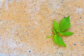 raspberry leaf on yellow brick