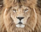 Mighty beast