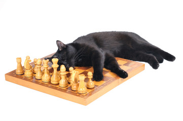Black cat sleeps on a chess board with figures isolated on white