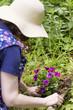 Frau pflanzt Blumen, woman is planting flowers