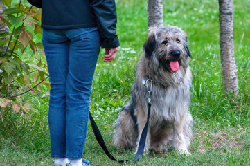 South Russian Shepherd dog sitting near the human legs