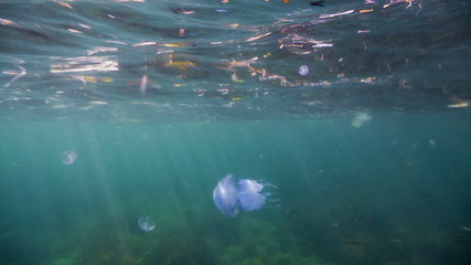 Inhabitant Of The Sea: Swimming Jellyfish