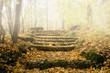 Herbst, Treppe im Nebel, Weg nach oben