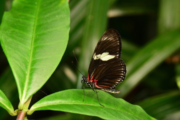 Long wing butterfly sits on a plant.