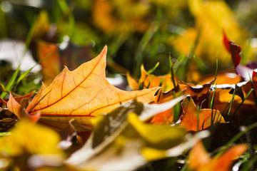 Herbst: Laubbäume, Sonne und bunte Blätter