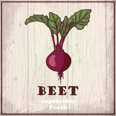 Fresh vegetables sketch of a beet