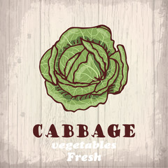 Fresh vegetables sketch of a cabbage