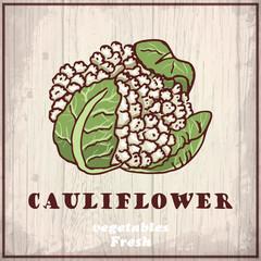 Fresh vegetables sketch of a cauliflower