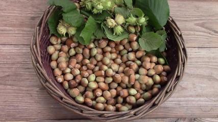 harvest hazelnuts