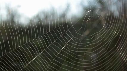 cobweb in wind