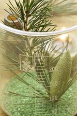 Pinus Fyrreslægten Pino Pine Kiefern Pin Sosna Сосна אורן