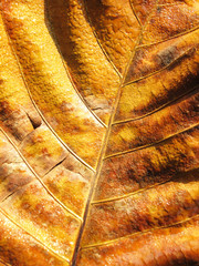 Macro view on textured autumn brown leaf