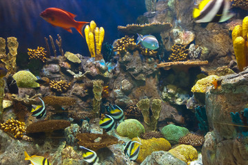 Fishes and corals reef in Aquarium