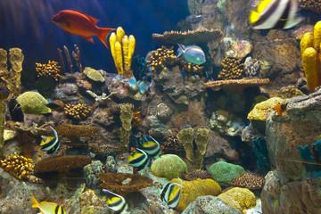Fishes and corals reef in Aquarium