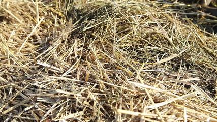 Closeup of sunlit hay stack