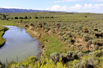 Bisons dans les plaines de l'utah