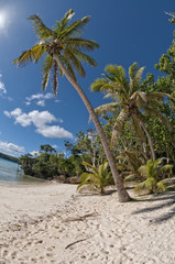 Polynesian Paradise white sand beach with coconut tree