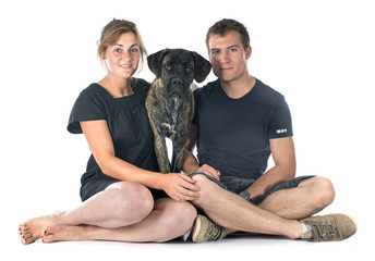 puppy cane corso and couple