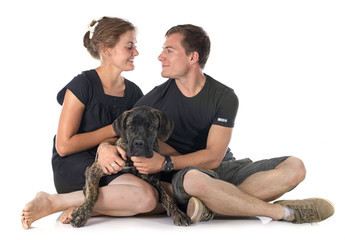puppy cane corso and couple