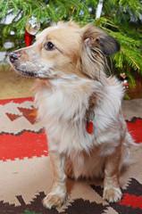 dog and the christmas tree