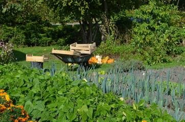 Jardin dans le Pays d'Auge (Normandie)
