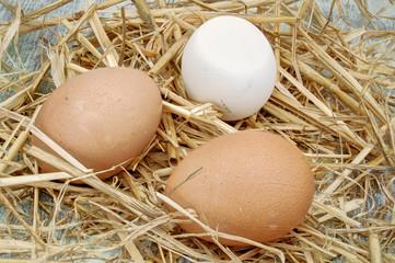 frische Eier weiß und braun