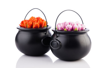 Two pots with tulip flowers isolated on the white
