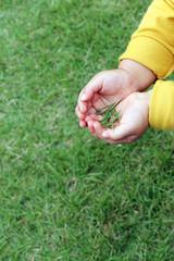 芝を摘む子供の手