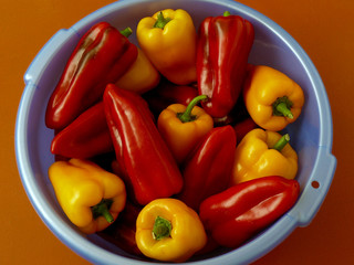 home grown sweet peppers in plastic bowl