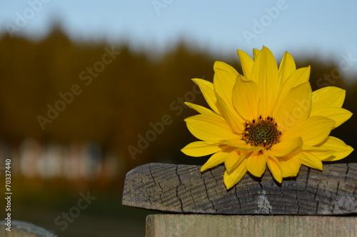 canvas print picture Blume Holz