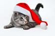 canvas print picture - weihnachten mit Kater