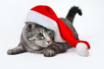weihnachten mit Kater