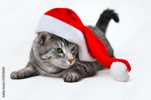 canvas print picture weihnachten mit Kater