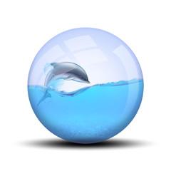 Dauphin dans bulle